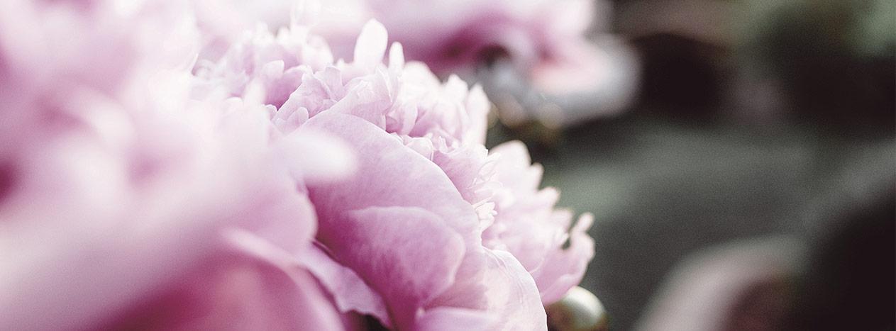 Flor peonía imperial